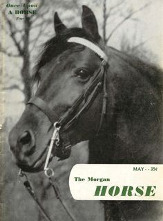 The Morgan Horse magazine with this issue presents for its readers' approval a new type of cover. The magazine believes that because Morgan people want more and better Morgan pictures that it should devote a cover in its entirety to the subject rather than confine it to a limited area. The subject of this month's cover is the late, great Dude Herod, owned by Miss Edna E. Tisdale, of Baraboo, Wisconsin. May 1952