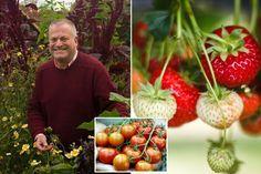 Gardening: News, advice, calendar, tips, photos & offers - Mirror Online Diarmuid Gavin, Starting A Vegetable Garden, Mirrors Online, Helpful Hints, Calendar, Advice, Gardening, News, Photos