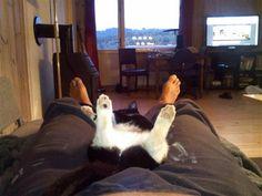 Copy Cat...