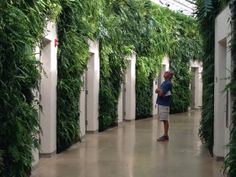 Living wall in bathroom area in conservatory, Longwood Gardens.  Photo by Melissa Clark