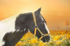 Gypsy Horse, Instagram Images, Horses, Black And White, Yellow, Artwork, Animals, Work Of Art, Animales