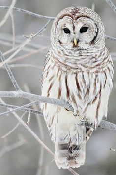 Owl Winters Wonderland