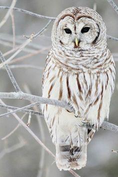 Owl Winters Wonderland