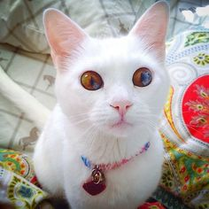 Cat eyes realize real lies.