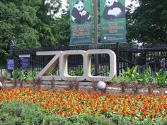 washington zoo,Dc