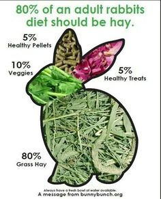Responsible Rabbit Care- this is the proper food pyramid for a rabbit, i do say though that it's a little less than 5% for treats, also carrots are a veggie but are high in sugar and are considered a treat depending on how much you give to your lovable bunny  :)