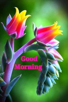 Write Your Name On Have A Very Good Morningjane Wero Piconline