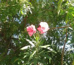 365/69 - Flores que alegram meu dia.