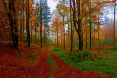 Photo An Autumn Walk