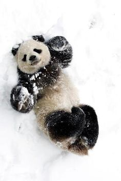 How cute is this?  ...  Just trying to make some snow angels!