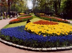 TULIPS holland gardens - Google Search