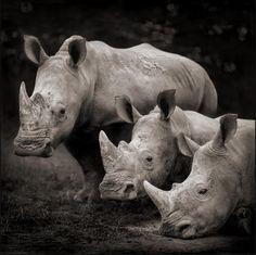 The Reel Foto: Nick Brandt: Majestic Animal Portraits