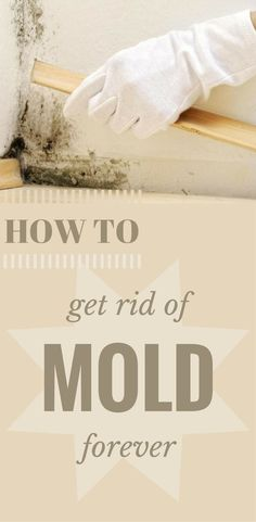 How To Get Rid Of Mold Without Chemicals - Forever