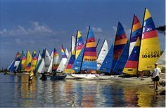 Watching Hobie Cat races in Baja. Cat Races, Apple Vacations, Angeles, Full Sail, Charter Boat, Sailing Outfit, Sail Away, Second World, Catamaran