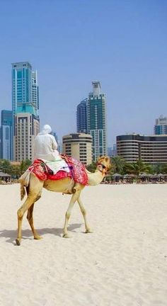 Dubai, India: Camel ride on sands viewing the city... odd