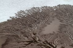 """Believe it or not, what look like photographs of microscopic moss or trees laid against a snowy landscape are actually aerial shots of dried up, spiny rivers in Baja California, Mexico. The images, taken by photographer Adriana Franco for National Geographic, capture nature's most wondrous beauty.""  Via Honestly WTF"