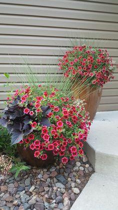Planters.  Red million bells, Juncus, Diamond frost Euphorbia, and dark potato vine.  Yellow House Landscape Design.