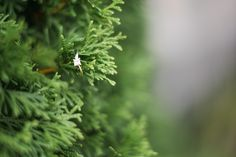 Aj Photography, Herbs, Pictures, Photos, Herb, Grimm, Medicinal Plants