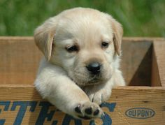 Razas de perros más vendidas en el mundo