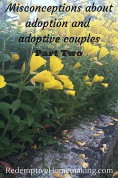 "Misconceptions about adoption and adoptive couples (Part - Redemptive Homemaking ALSO links to Part 2 (so good--""say this and NOT this"" advice) China Adoption, Foster Care Adoption, King Jesus, Adoptive Parents, Family Kids, Homemaking, The Fosters, Parenting, Couples"