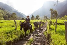 Finding the Lorax in Colombia's Cocora Valley Visit Colombia, South America, Hiking, Tower, Horses, Adventure, Mountains, World, Places