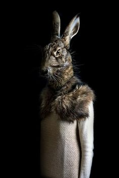 Photo Gallery: Miguel Vallinas's Animal Instinct | Popular Photography Magazine