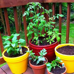 Vegetable garden in pots