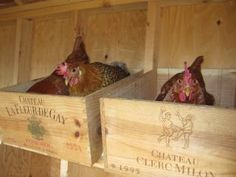 using wine boxes for egg laying boxes - cute!!