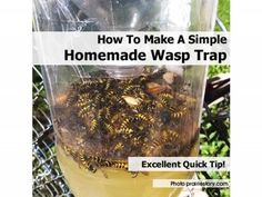 How To Make A Simple Homemade Wasp Trap - Home Tips World
