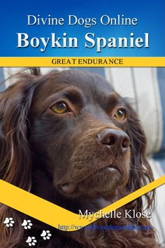 The Boykin Spaniel is a working dog that needs lots of exercise. They are also a great family dog that is docile and obedient. They are very sociable dogs that make great companions. In this Boykin Spaniels book we will explore their temperament, their health issues and their origins. $6.98 #BoykinSpaniel
