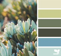 today's inspiration image for { succulent hues } is by . thank you, Jette, for another incredible image share! Colour Pallette, Color Palate, Colour Schemes, Color Combos, Design Seeds, Color Terciario, Plans Architecture, Jurassic, Color Palette Challenge