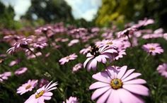 Week in Wildlife: A bee lands on flowers in the sunshine in St James's Park