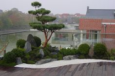 Japanese garden on the roof terrace, fantastic living in a penthouse with Japanga . - Japanese garden on the roof terrace, fantastic living in a penthouse with a Japanese garden -