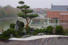 japanischer Garten auf Dachterrasse, traumhaftes Wohnen im Penthouse mit Japangarten