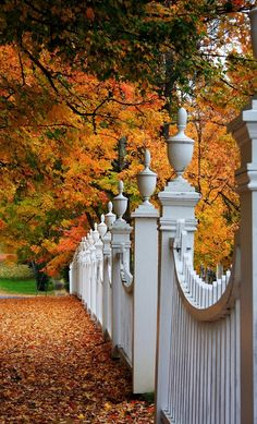White Picket Fences + Autumn Leaves. Is there anything more beautiful?