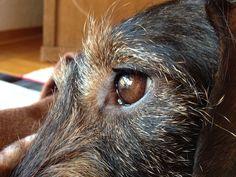 TiHo-Studie eine Chance für gelähmte Hunde