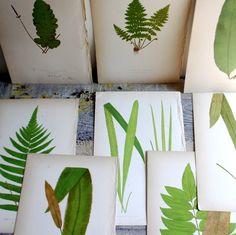 Antique Woodcut Botanical
