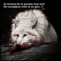 Greek Quotes, Picture Video, Wolf, Inspirational Quotes, Angel, Videos, Pictures, Quotes, Photos