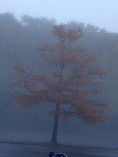 Foggy Autumn morning in Poughkeepsie , NY