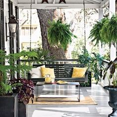 Swing & ferns! I need to make this happen soon!