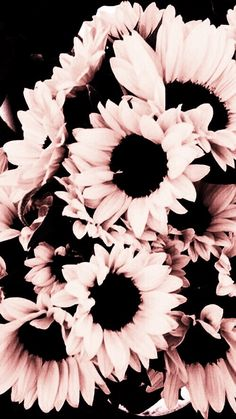 Love these pink sunflowers, beautiful! Love these pink sunflowers, beautiful! Cute Wallpaper Backgrounds, Tumblr Wallpaper, Pretty Wallpapers, Wallpaper Decor, Cool Iphone Backgrounds, Fall Wallpaper, Wallpaper Quotes, Black Wallpaper Iphone, Trendy Wallpaper