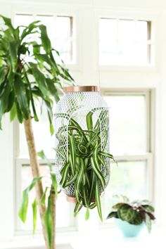 An Easy Hack to Turn this Inexpensive IKEA Lantern Into a Hanging Planter — Apartment Therapy Tutorials