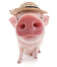 Artlist Collection THE PIG — summer