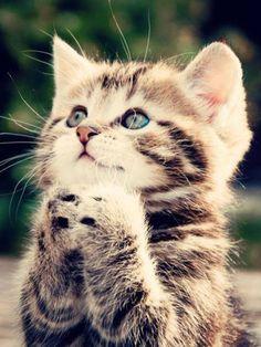Top 25 Cute Kittens and Funny Cats Yawns Cute Kittens, Cats And Kittens, Kitty Cats, Kittens Meowing, Baby Kitty, Munchkin Kitten, Small Kittens, Persian Kittens, Cats Bus