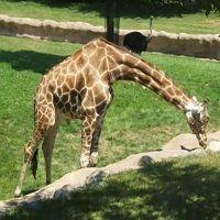 Michigan -Detroit Zoo