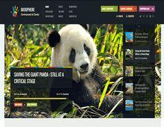 Templates de WordPress Para Asociaciones Sin Fines de Lucro