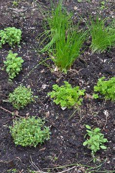 Tzazikivoileipäkakku – Keittiössä, kotona ja puutarhassa   Meillä kotona Tzatziki, Feta, Plants, Planters, Plant, Planting