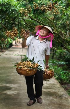 Tìm hiểu về triệu phú bán nhãn lồng tại Hưng Yên