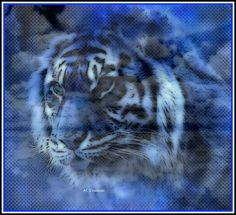 blue tiger Beautiful Wolves, Beautiful Things, Symbols Of Strength, Blue Tigers, Water Element, Here Kitty Kitty, Once In A Lifetime, Leopards, Lions