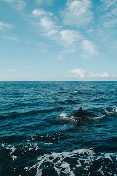 Azoren - Terceira - whale and dolphine watching -